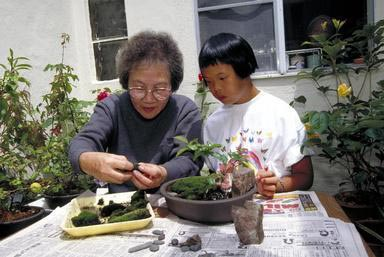 Down Syndrome, disability, disabled, Bonsai, grandmother, granddaughter, garden, San Francisco, California