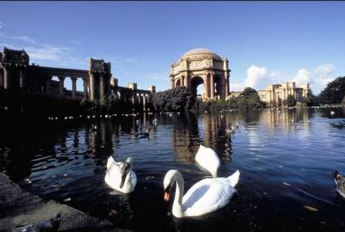 Exploratorium, swans, San Francisco, California, pond