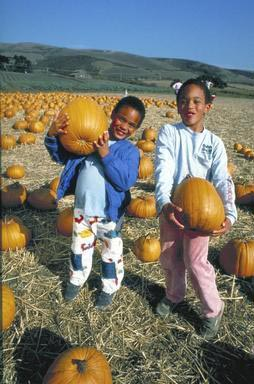 pumpkin, pumpkin festival, siblings, African American, Halfmoon Bay, California